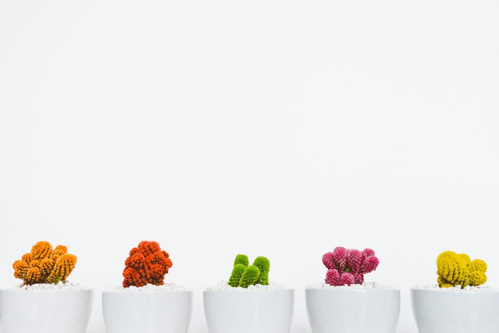 colourful and diverse cactus pots